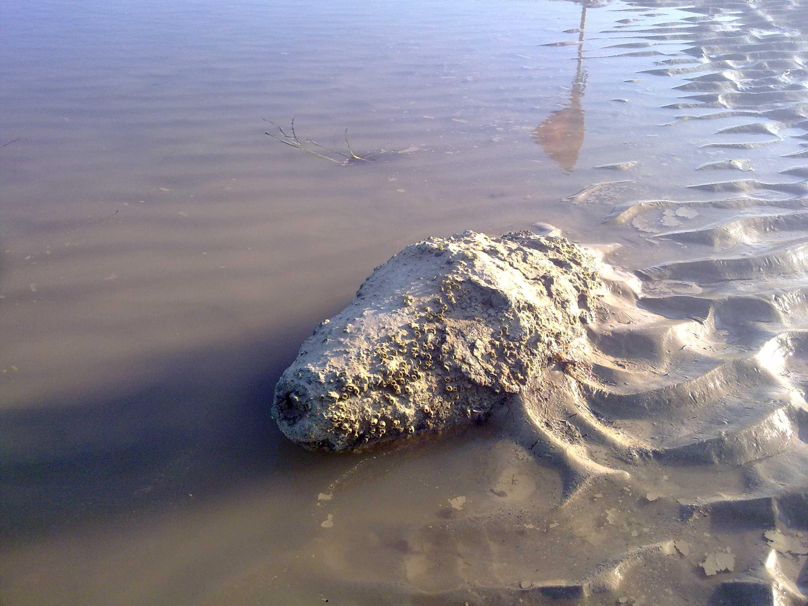 день строителя находки в азовском море фото тебя поздравим, пожелаем