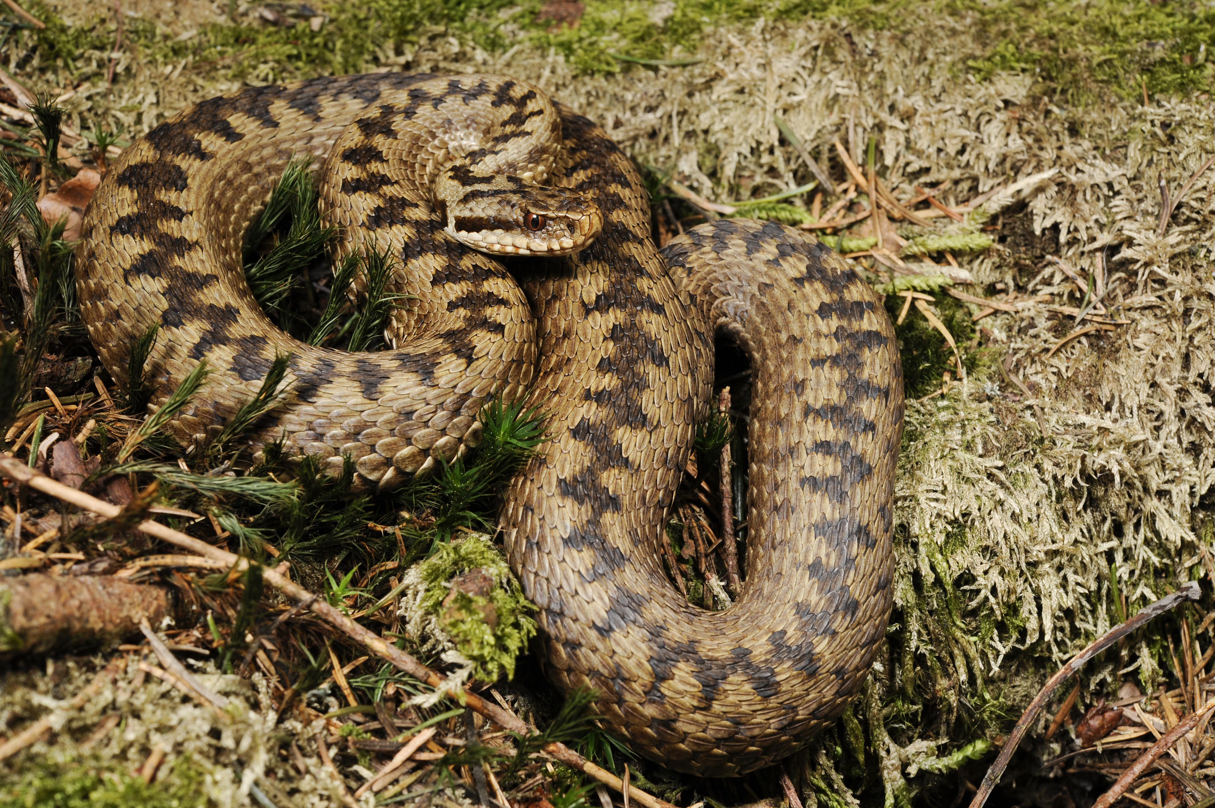 кулич змеи ростовской области фото и названия хотите, чтобы