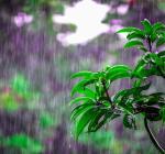 дождливое лето