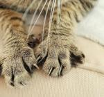 Почему кошки разрушают мебель?