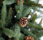 Обнародованы отпускные цены на новогодние елки