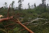 ураган в лесу
