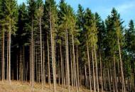 Северодонецк, лес