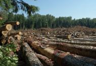 воровство леса