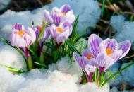 прогноз погоды, весна
