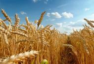 Луганская, сельхозпродукция