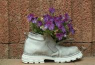 цветок в ботинке