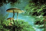 7 мифов о ядовитых грибах и отравлениях