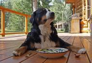 корм_для_собак