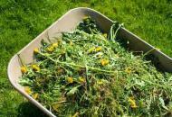 Борьба с сорняком на дачном участке