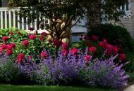 Тенелюбивые растения для вашего сада
