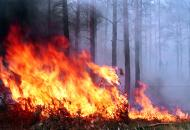 лесной-пожар