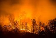 пожары-в-сибири
