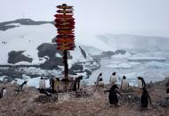 коронавирус в антарктиде