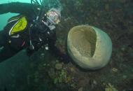 антарктическая губка