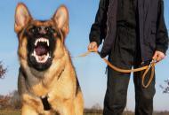 злая-собака
