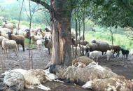 убило-овец