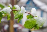 снег-весна