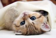 кино кот