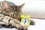 кошка и часы