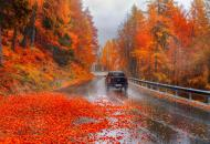авто осень