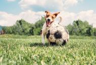 пес футболист