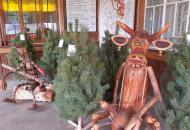 цены на новогодние елки в Луганской области