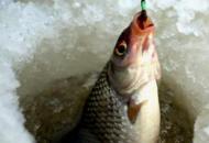НаЛуганщинес 1 ноября запрещенвылов рыбы в зимовальных ямах