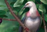 На островах Тонга в Тихом океаненайдены останкидревнего гигантского голубя