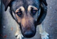 Северодонецк, собаки