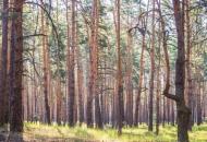 Луганская, лес