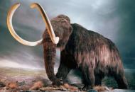 ученые планируют клонироватькосматых мамонтов