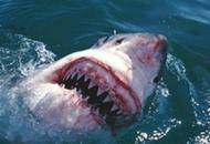 акула напала на украинцев
