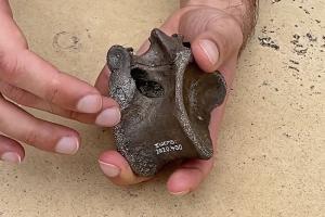 В Британии обнаружены останки нового вида динозавров, живших115 млн лет назад