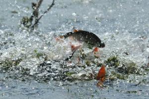 запрет на лов рыбы в период нереста