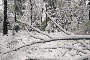 Бельгия, снегопад