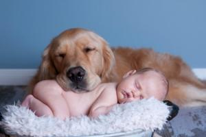 10 лучших пород собак для семьи