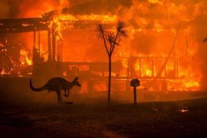 пожары-австралия