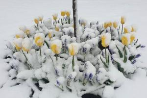 снег-в-мае