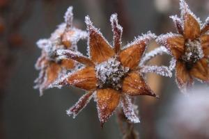 осень-мороз