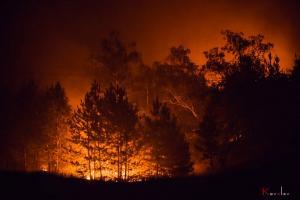 Создана онлайн карта лесных пожаров на Луганщине
