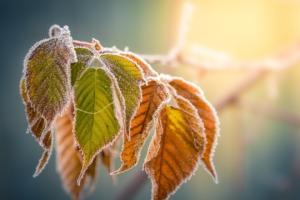 В Украине резко похолодает и ударят первые заморозки