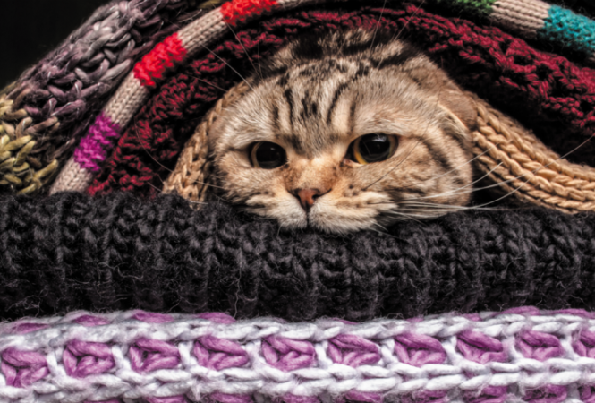 кот в вещах