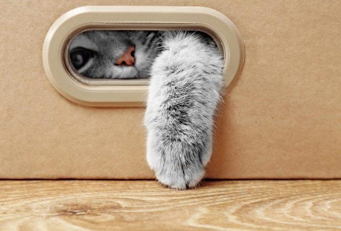 Как сделать игрушку для кошки?