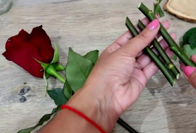 Проверенные способы укоренения роз из букета