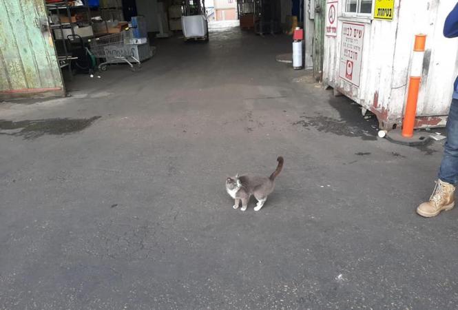 Украинский кот