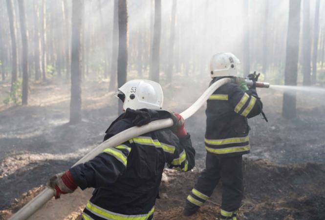 Луганская, лесные пожары