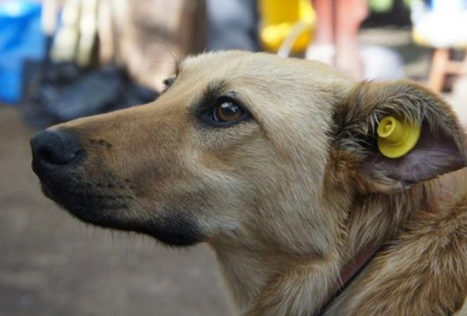 В Лисичанске началистерилизовать бездомных собак
