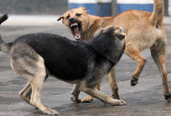 В Лисичанске проведут стерилизацию 100 бродячих собак