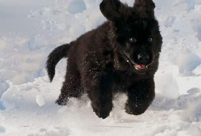 Сеть повеселила реакция животных на снег